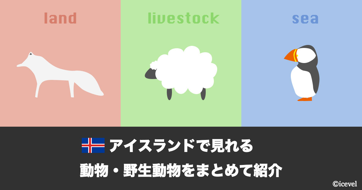 アイスランドで見れる動物・野生動物をまとめて紹介